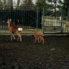 "Акция "" В зоопарк вместе с мамой"""